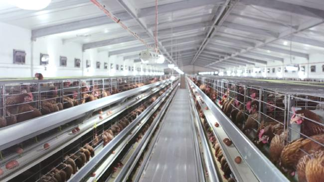 <a href='http://news.foodmate.net/tag_833.html' class='zdbq' title='鸡蛋相关食品资讯' target='_blank'>鸡蛋</a>