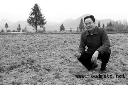 南地区土壤大多重金属超标 已难找一块有机田