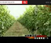 中国酒文化之张裕葡萄酒(三)