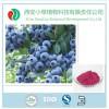 西安小草现货供应优质蓝莓果粉