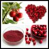 蔓越莓提取物 蔓越莓花青素
